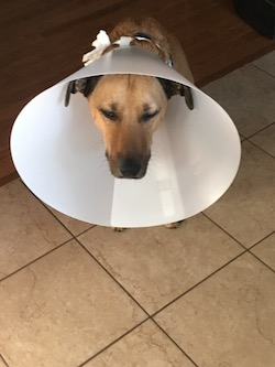 20180807_cone_of_shame