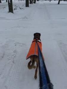 walking dog in February